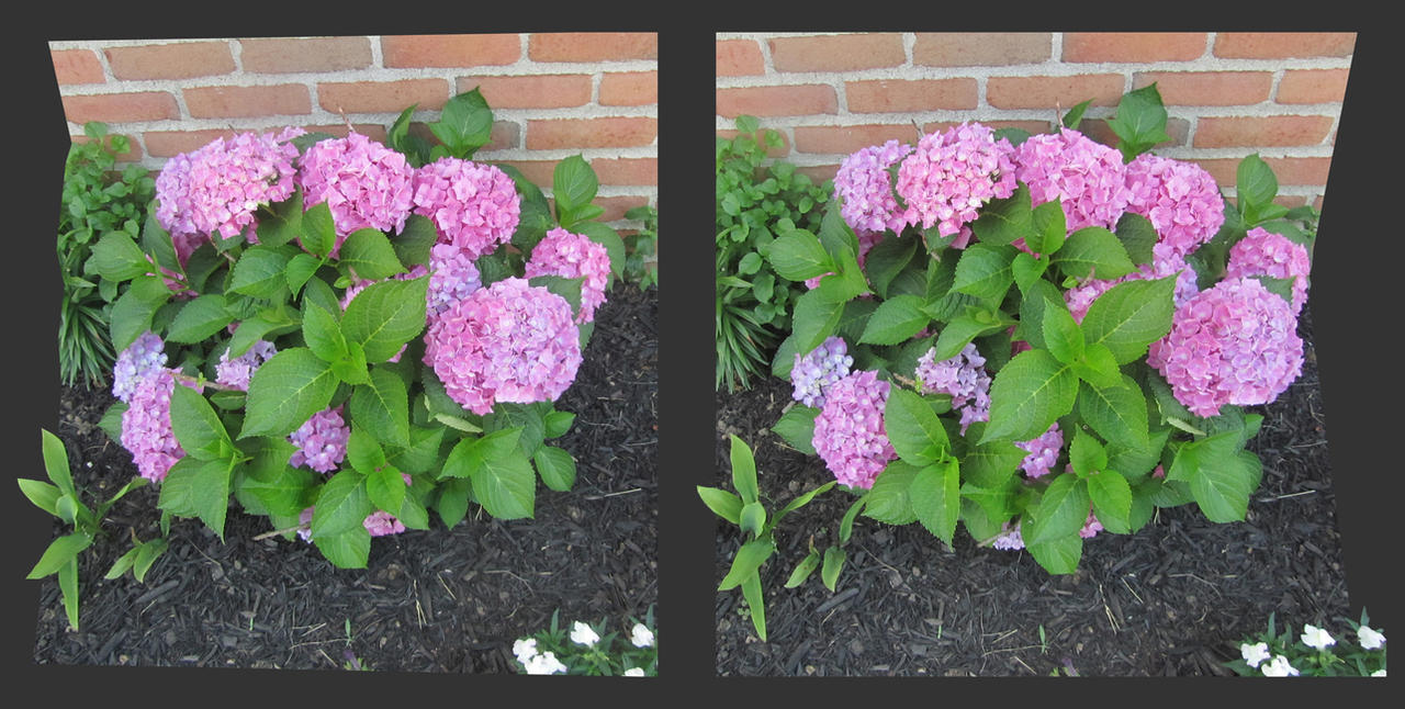 Stereograph - Flowerbed by alanbecker