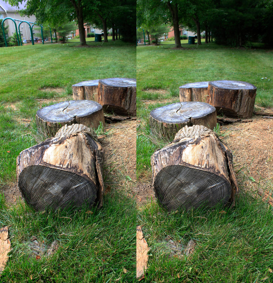 Stereograph - Stump by alanbecker