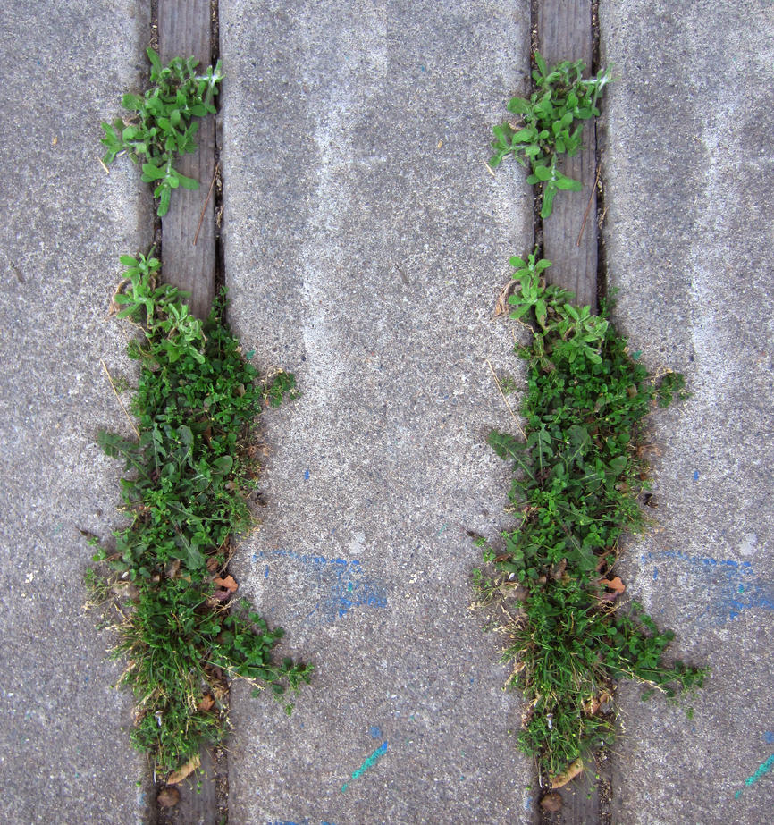 Stereograph - Weeds by alanbecker