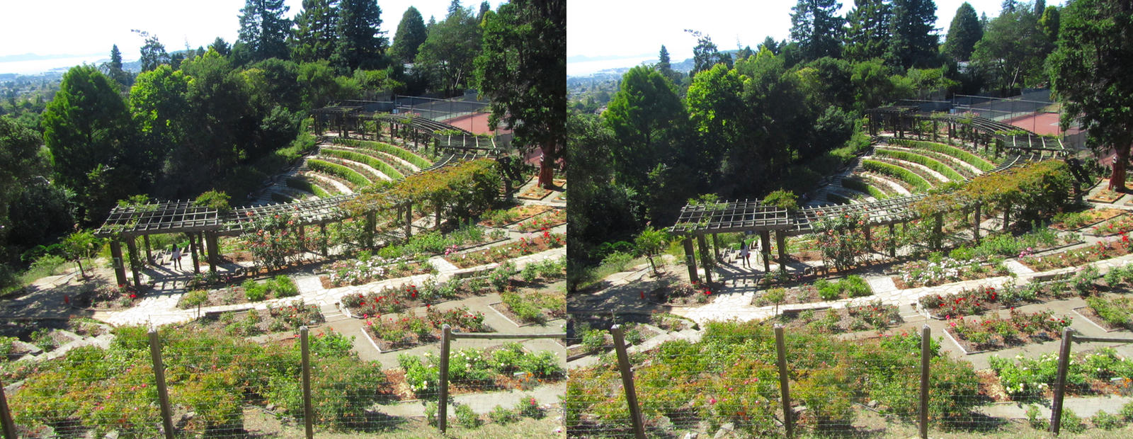 Stereograph - Rose Garden by alanbecker