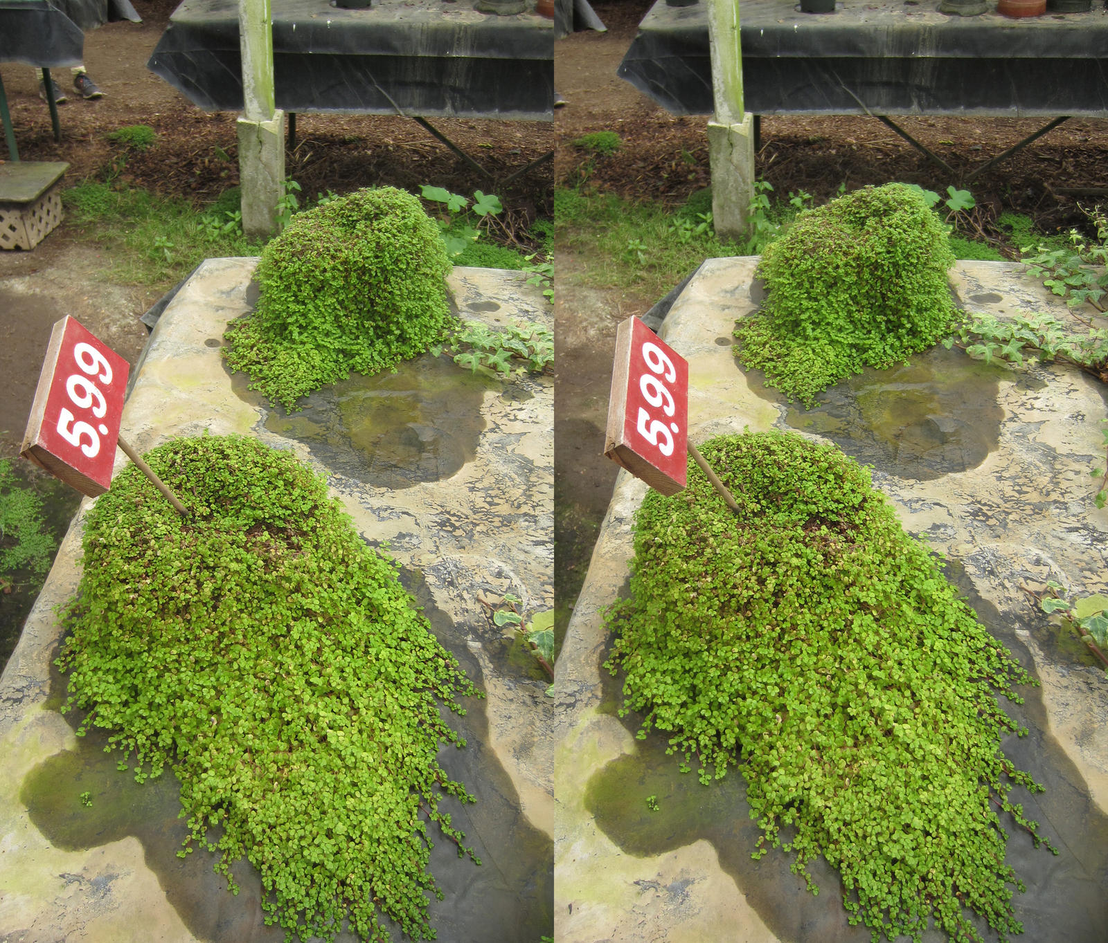 Stereograph - Green Lumps by alanbecker