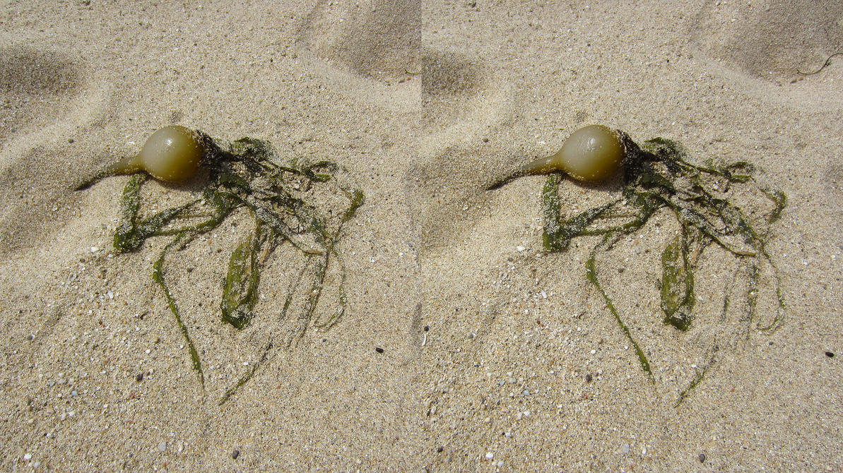 Stereograph - Sea Carrot by alanbecker