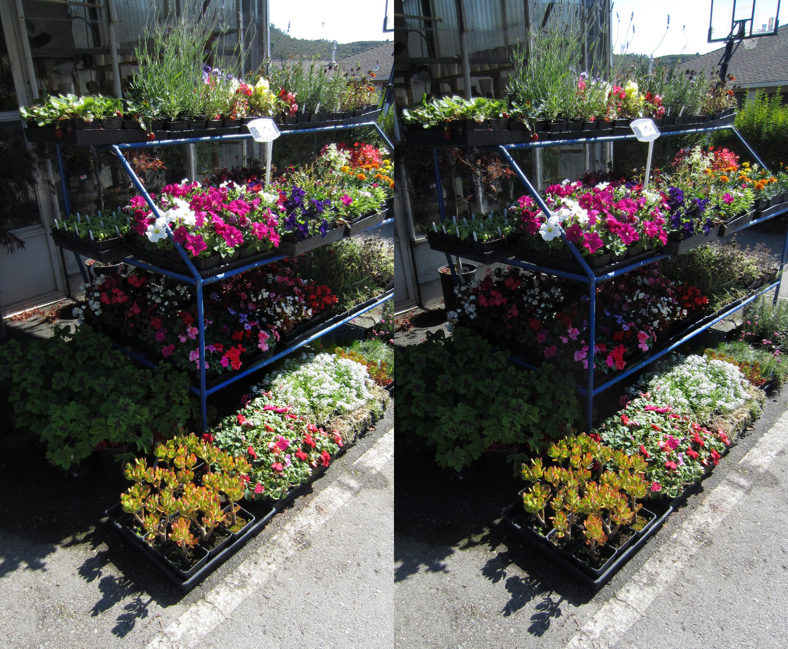 Stereograph - Flower Shop by alanbecker