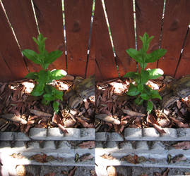 Stereograph - Short Plant by alanbecker