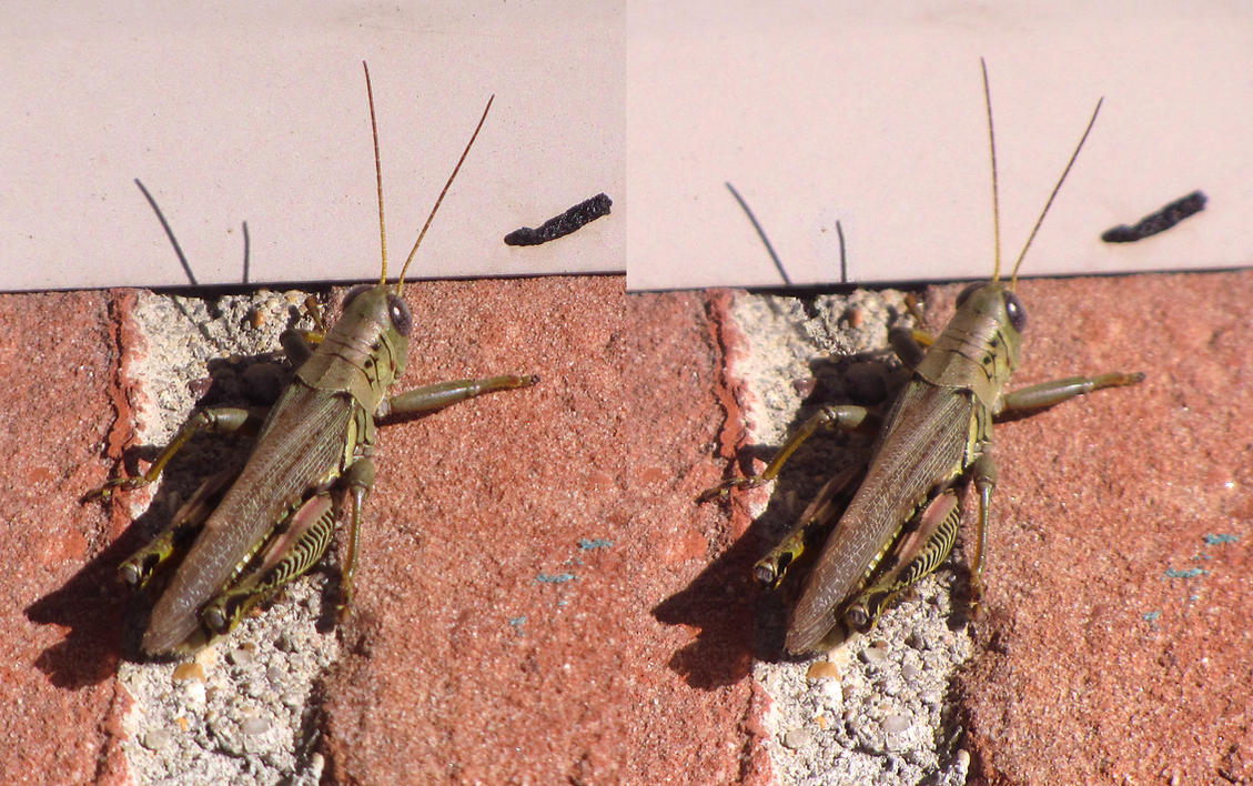 Stereograph - Grasshopper by alanbecker