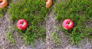 Stereograph - Apple Among Grass