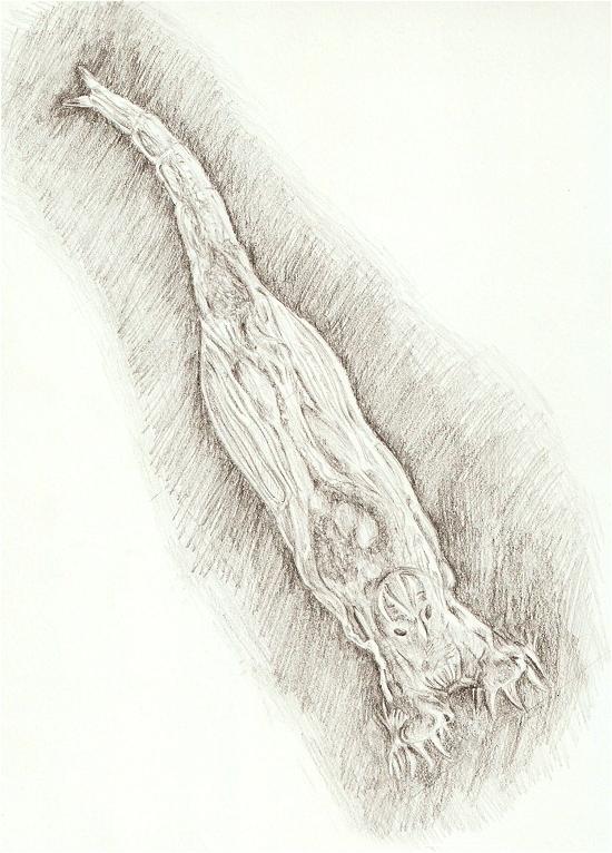 Rotifer - Philodina rosea by Scutigera