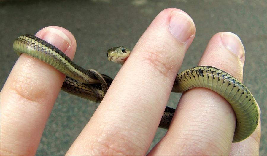 Snake wrap by Scutigera