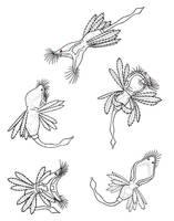 Rotifer sketches 1 - Colleen by Scutigera