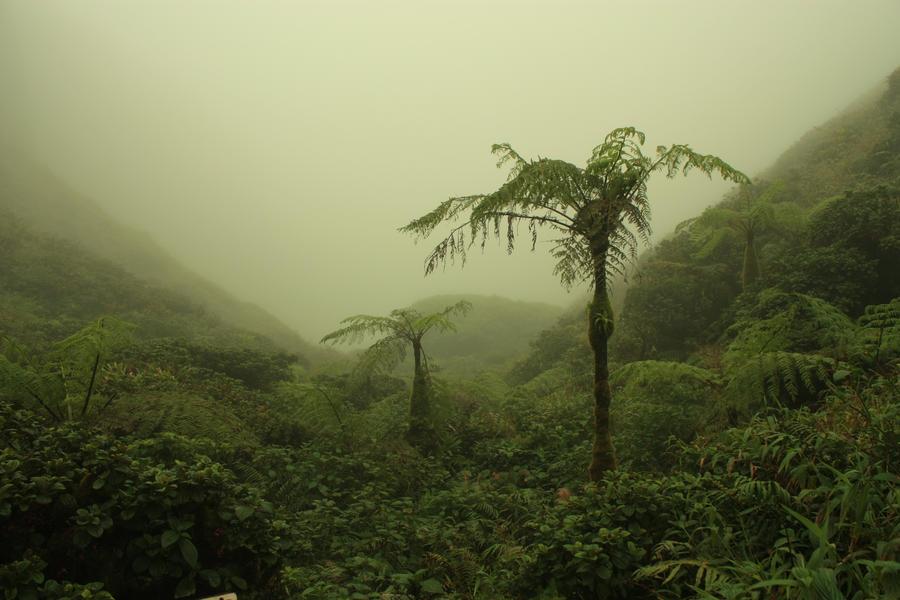 Martinique 3