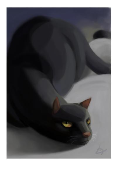 Cat by Lupuna