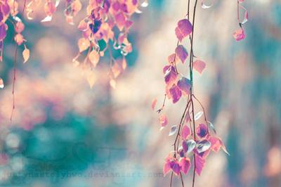 leaves by JustynaStolyhwo