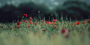 .field of innocence