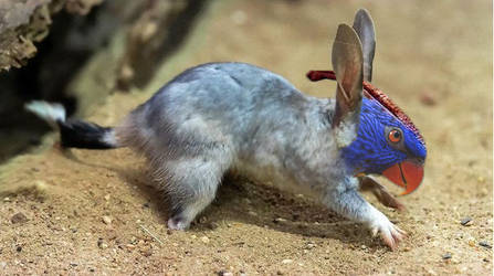 Bilby - parrot by BaileyisDarcy
