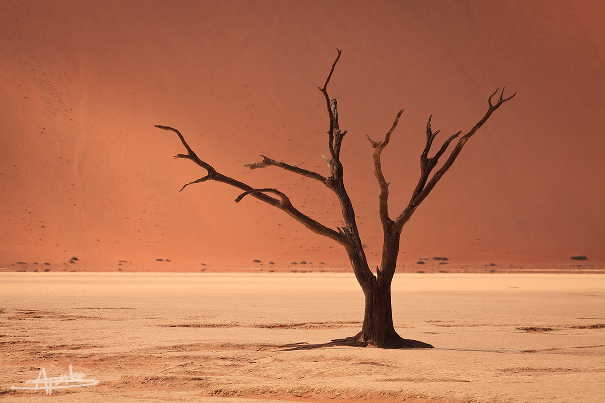DEADVLEI by SebastianFunke