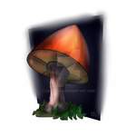 Mushrooms in the night