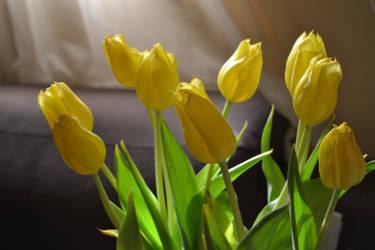 Wilting Yellows