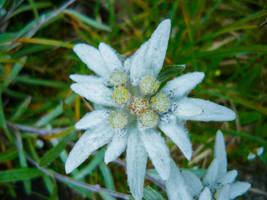 White flower 1 (1 of 1)