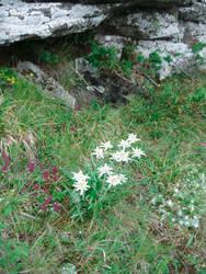 White flower 3 (1 of 1)