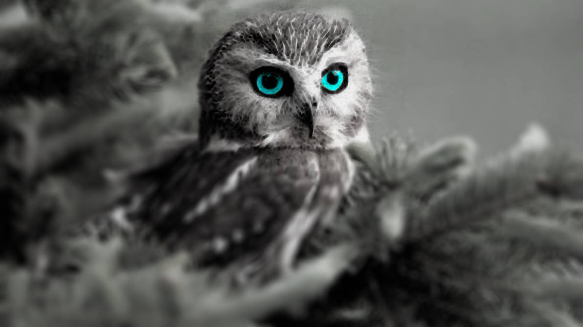 Owl Blue Eyes HD by Meerk4tFTW ...
