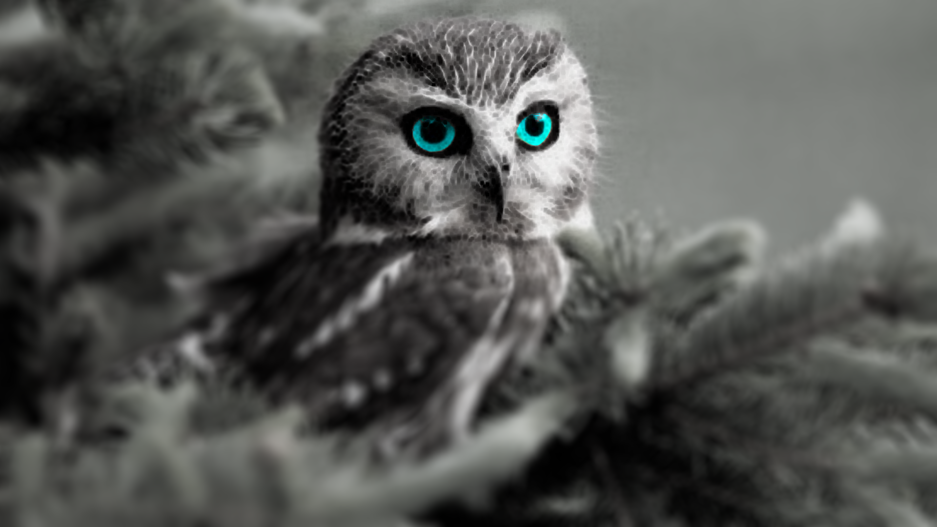 Owls With Blue Eyes | www.imgkid.com - The Image Kid Has It!