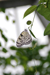 The Butterfly by fashoo