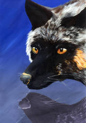 Reflections of a silver fox