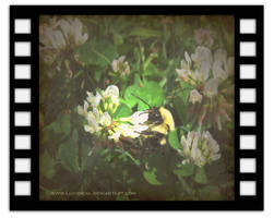 Alkyone Film by Lucidical