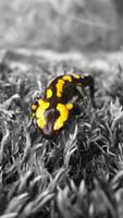 Salamander by TWPictures