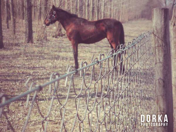 Amikor pedig a kerítésre fókuszál a fényképező...