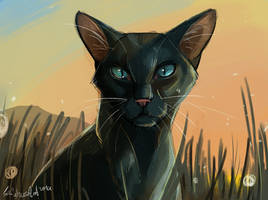 Crowfeather by SafulousArt