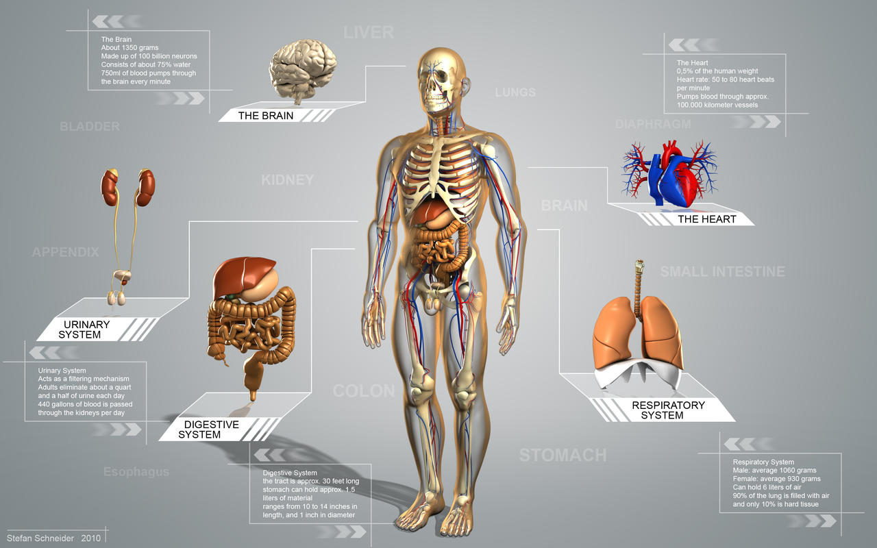 Digestive System Tour Guide