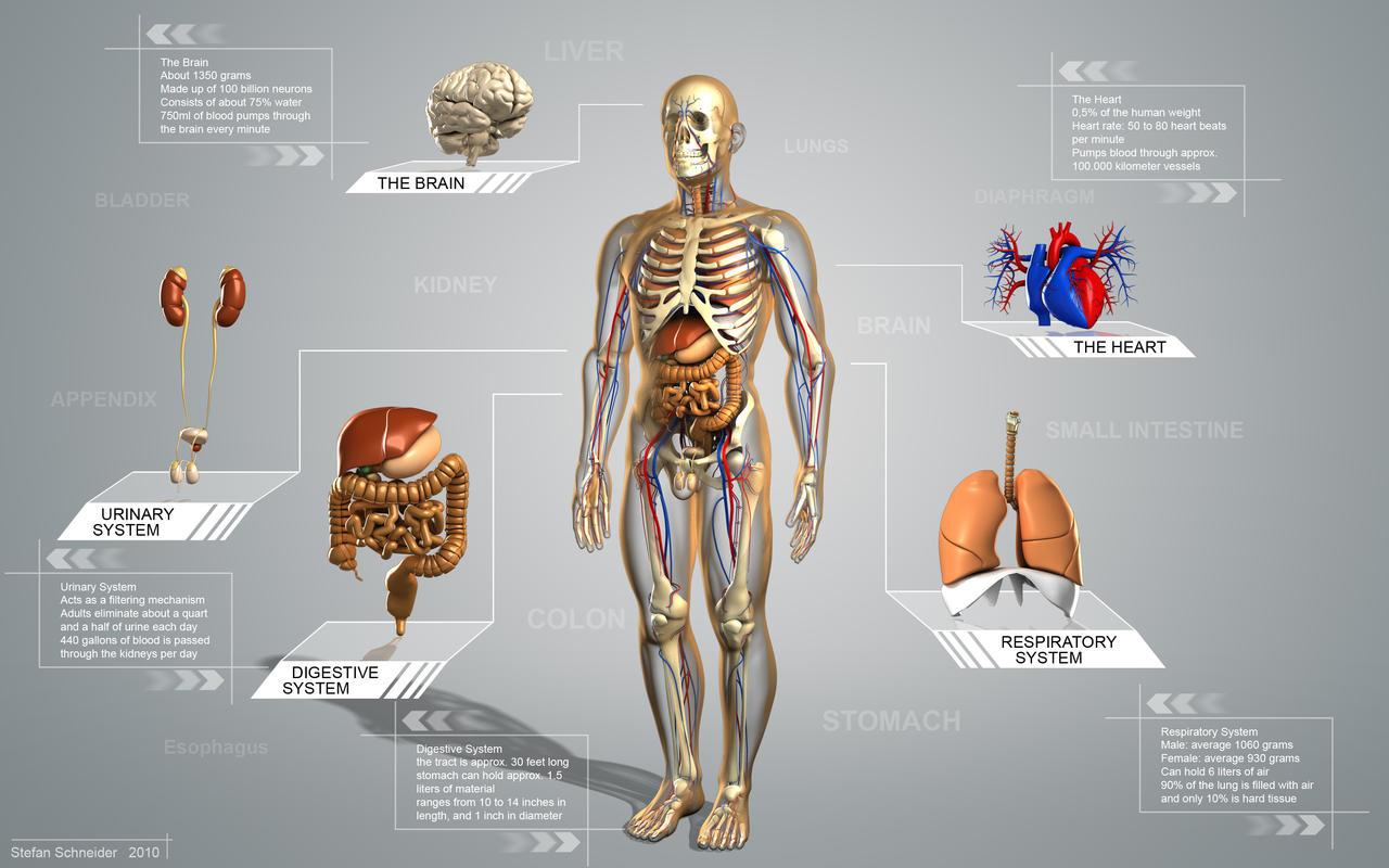 Schön Schwein Anatomie Vs Menschlicher Anatomie Fotos - Physiologie ...