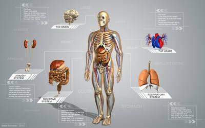 Human Anatomie by Stefan1502