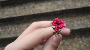 Uma pequena flor by TonPresley