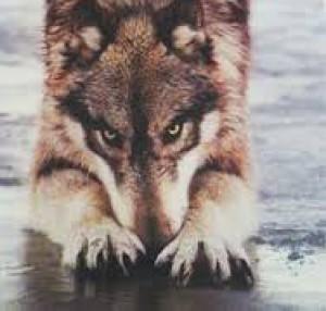InsurrectionsCrossin's Profile Picture