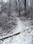 Winter: Path in the forest
