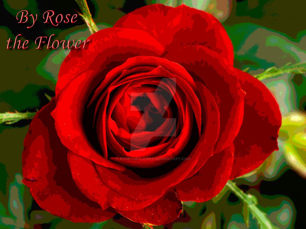Valentine Flower by rosetheflower