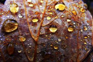 .leaf. by Bandea-photos