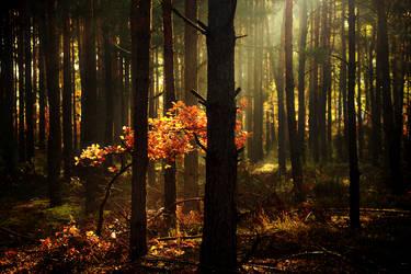 Woods by Mysterii-Art