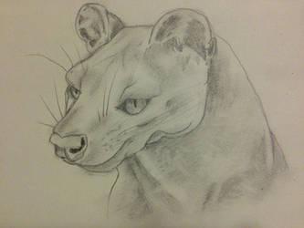Fossa from Madagascar sketch by KilynnTor