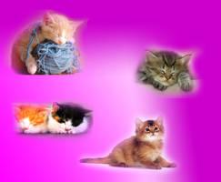 Lovely little cats