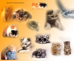 Lovely little cats 2