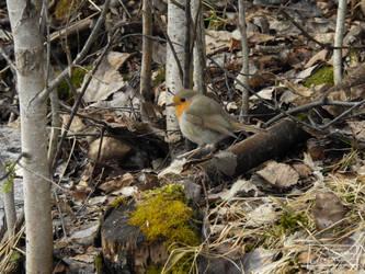 Robin 2 by LonelyWolf85