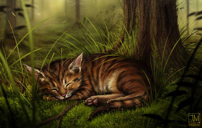Forest Cat by jerry8448