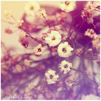 Soft Dreams - 17 by pinoleny