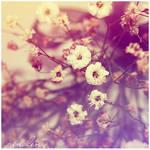 Soft Dreams - 17