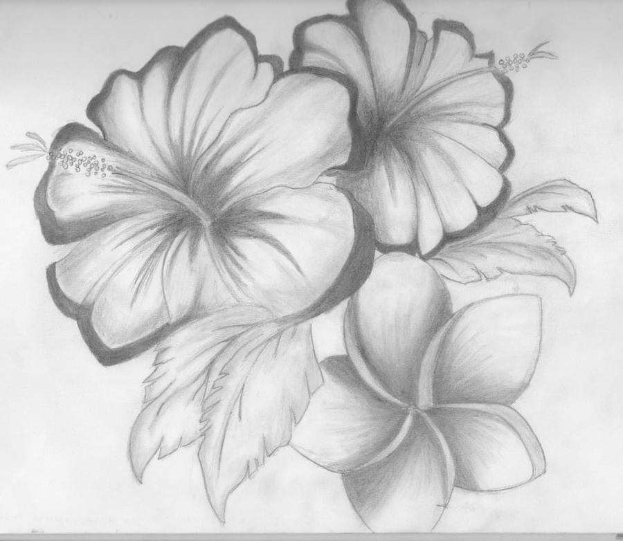 Flower Drawing Ideas Images