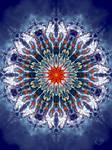 Starfish-Universe