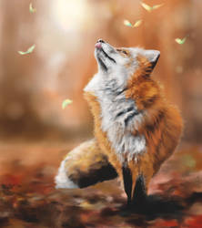 Fox warm light, reference practice